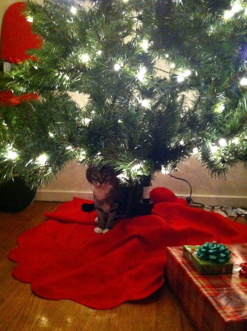 dom-christmas-tree