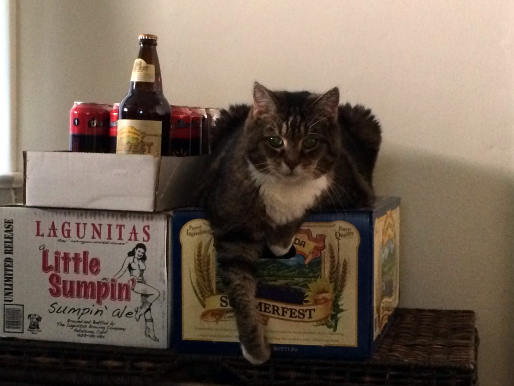 dommy cat beer