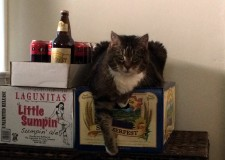 Summer beers, cat-approved.